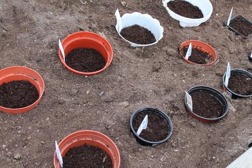 Когда и как сажать лук севок / Огород / Мои дачи