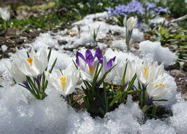 Посадка цветы под зиму