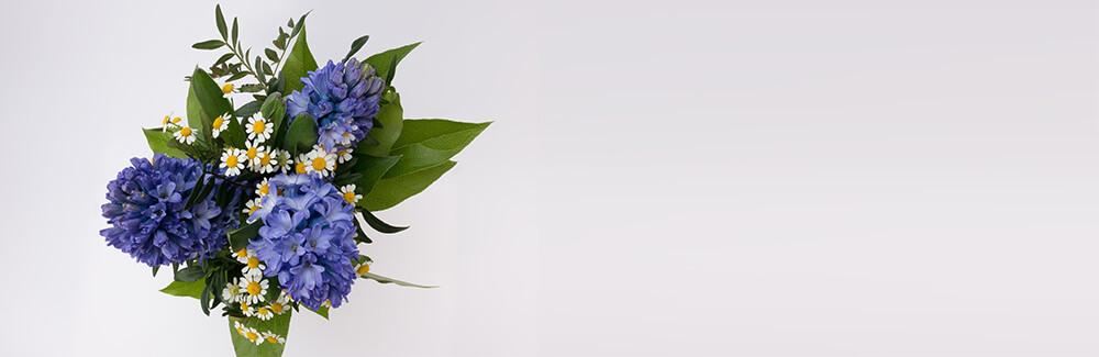 Как заставить гиацинт цвести зимой?