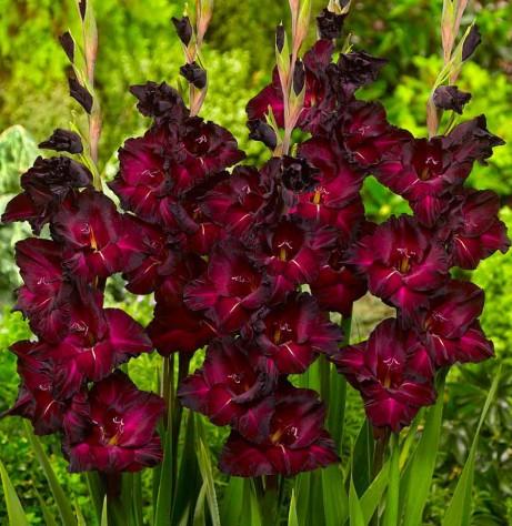 Где заказать саженцы и семена цветов доставка цветов в красноярске эдельвейс