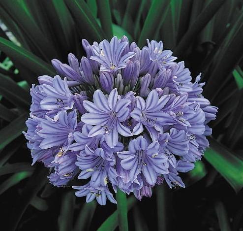 Хочу заказать семена цветов почтой в рб, улан удэ букетов цветов заказать
