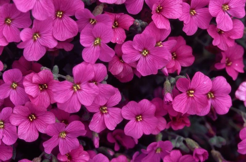 купить семена цветов каталог