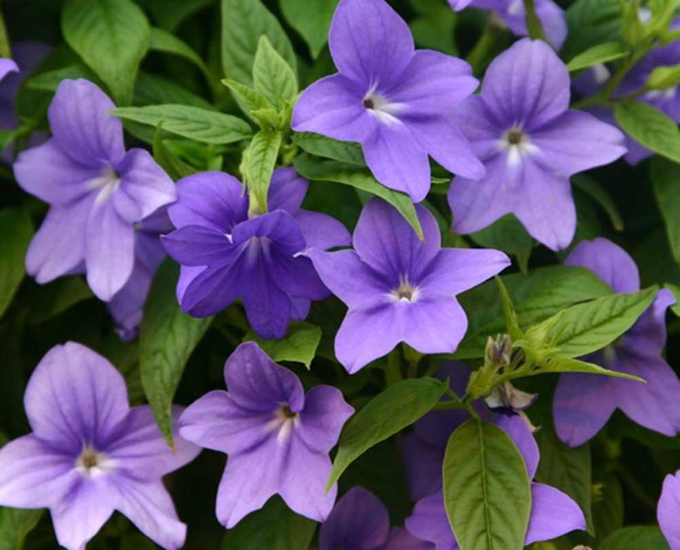 Как упаковывать цветы в пленку пошагово